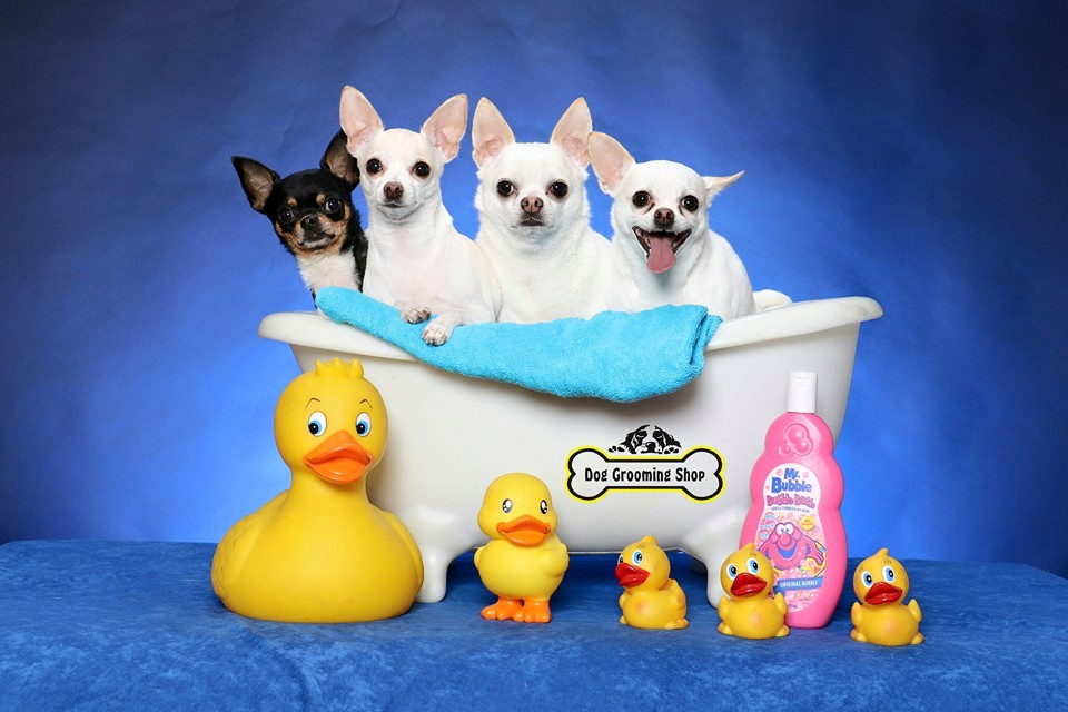 Pet Portrait Day @ Dog Grooming Shop